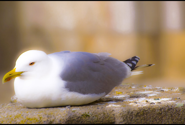 Bird treat In Dreamland-Porto
