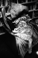 Old cat on a old chair