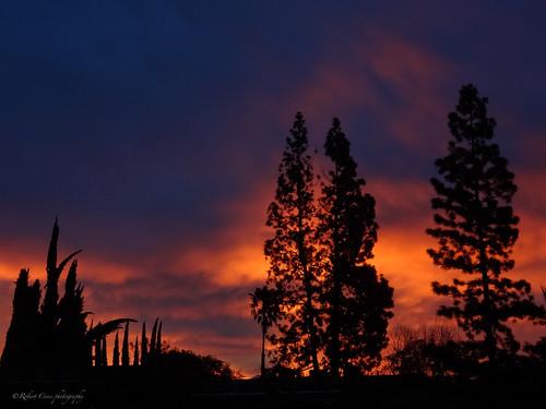 california trees red sky nature clouds sunrise skyscape landscape fire dawn losangeles glow alba sony silhouettes amanecer socal aurora pasadena madrugada aurore sierramadre deathcab aube alborada salidadelsol pointdujour leveldusoleil dschx9v