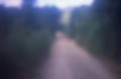 Yo Camino