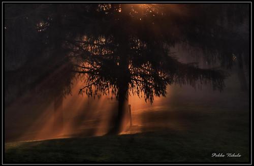mist water fog sunrise vesi puisto usva sumu auringonnousu