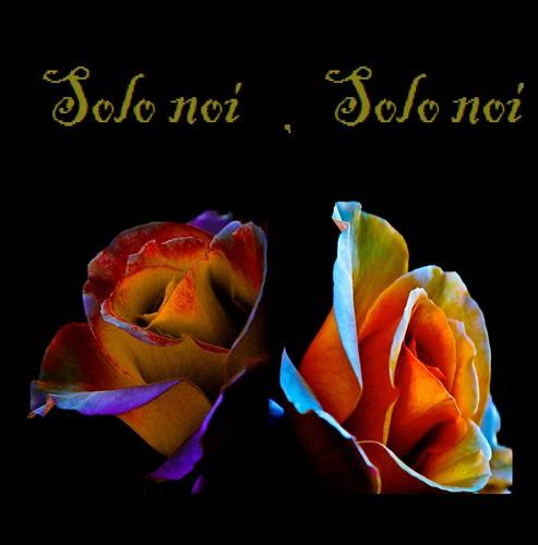 rose floralfantasy happyvalentinesday totocutugno solonoi world100f dianagurtskaya saariysqualitypictures magicmomentsinyourlifenivel1