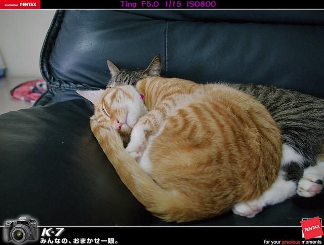 cat's life 2