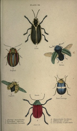 n316_w1150 by BioDivLibrary