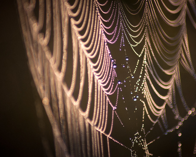 Spider web pearls