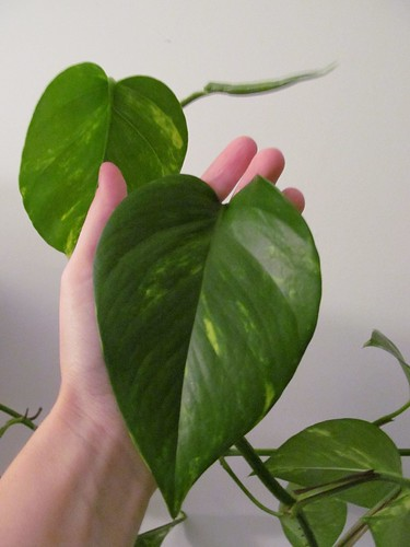 pothos is a chthonic monster