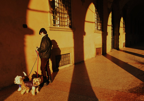 walk the dogs: bologna style