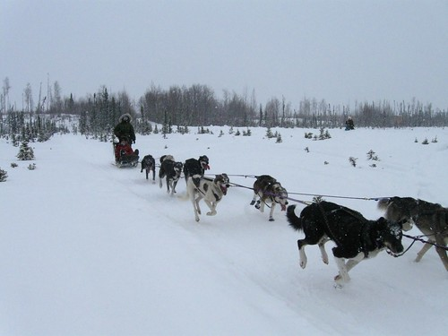 Training-Jr-Iditarod-Aurora-2-2012-11