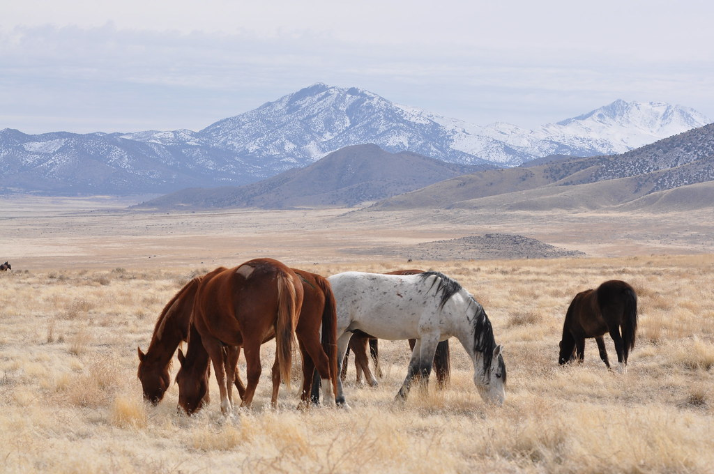 Photo of Wild Horses in Utah