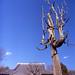 枯木の枝振り