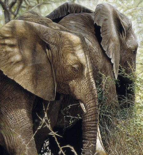 "'Elephants Feeding' oil on board 20"" x 21¾"