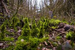 Forêt miniature