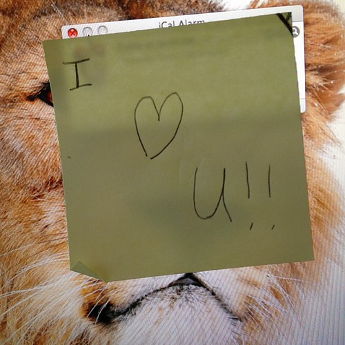 Love notes hidden in my laptop <3