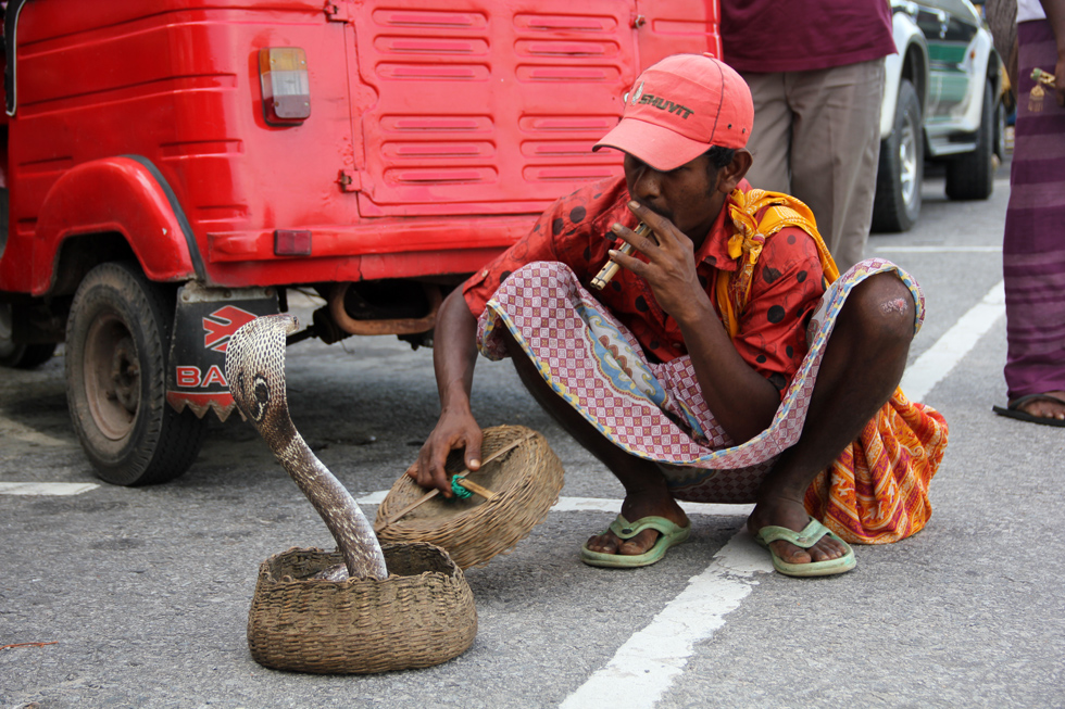 Cobra Snake Charmer in Sri Lanka