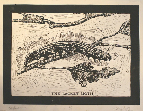 The Lackey Moth