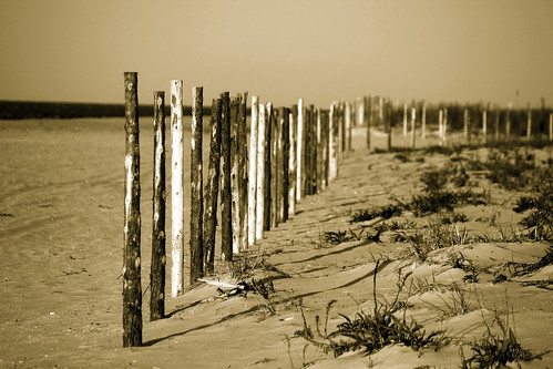 Fence Posts On The Beach