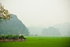Baie d'Ha Long Terrestre - Ninh Binh - Hoa Lu - 24