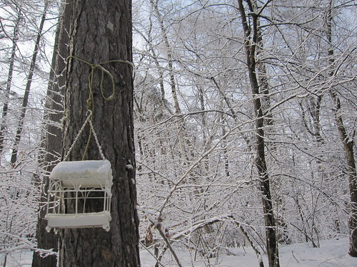 庭の雪  4.1 by Poran111