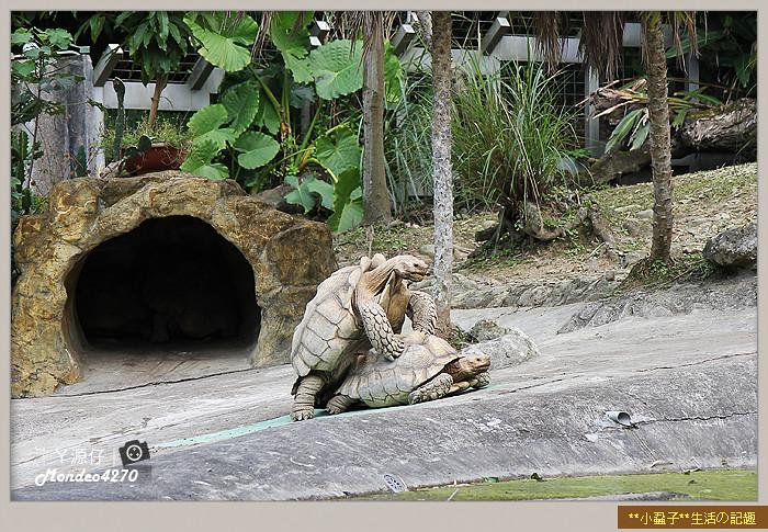 木柵動物園(圓仔)67