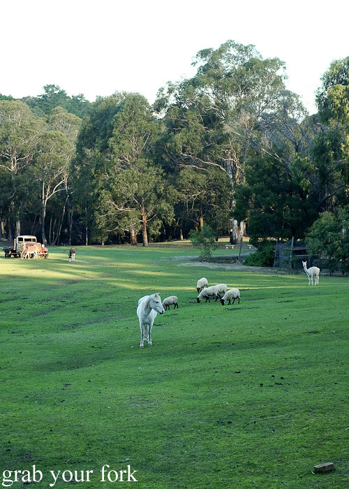 Horses, sheep and alpacas in Bundanoon