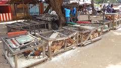 Live Chickens in Cages For Sale, Lilongwe, Malawi