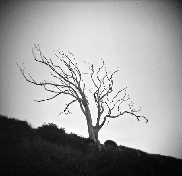 Murdered Tree