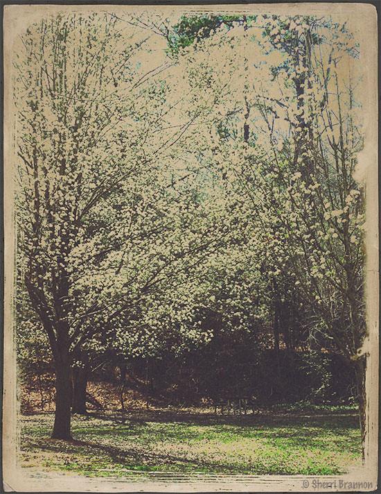 vintage spring trees