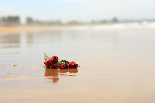 roses on beach