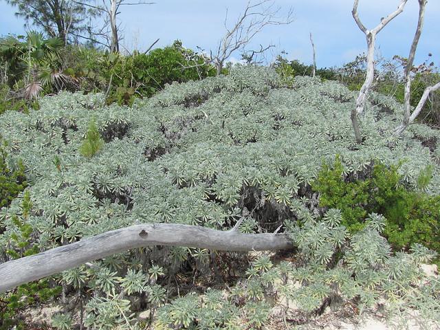 Blue green succulents