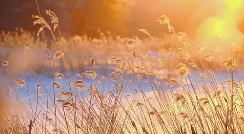 morning blue light orange sun snow reeds nikon jyrki winterbeauty kotka salmi d7000 nikonflickrawardgold pwnature