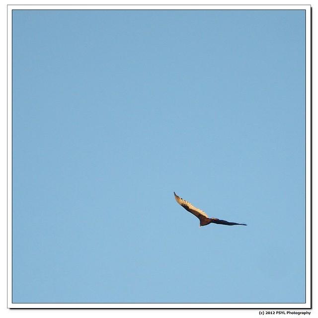 2012-03-25-P3259621
