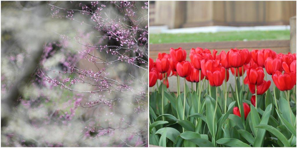 Flowers.3.26.12