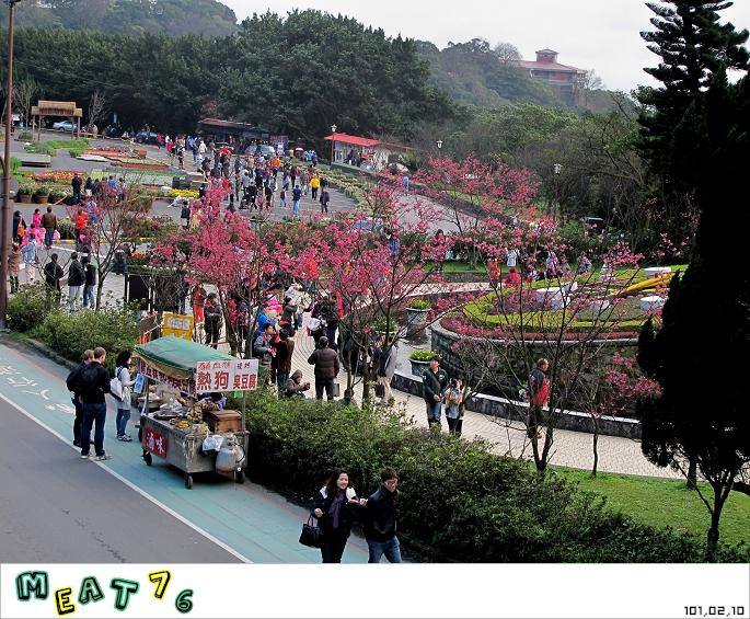 【遊記】陽明山國家公園|櫻花乍現在粉紅意境的花花世界09