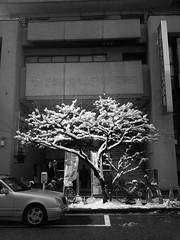 雪が積もって花が咲いたように見えた