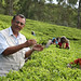 Small photo of Andrew Taylor, tea planter in residence