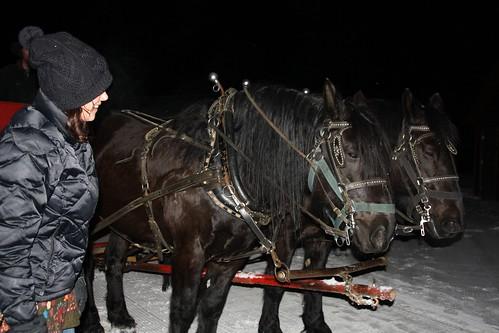 Horsed pulling sleigh