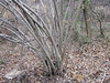 looking for some friends to make a thicket