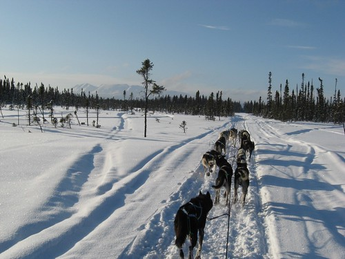 Training-Jr-Iditarod-Aurora-2-2012-3