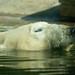 Lazing Polar Bear by Ztyrp