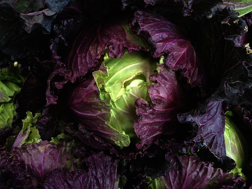 eatmorecabbage by Nature Morte