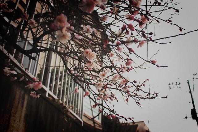 天城山_03