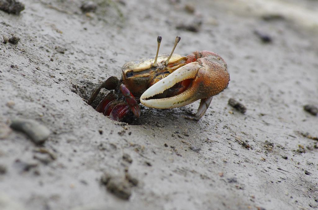 蟹老闆玩泥巴