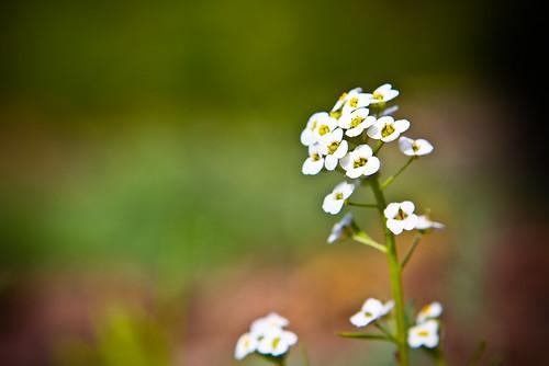 120420 Flowers