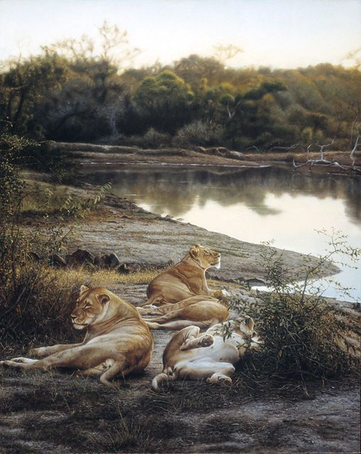 Lions resting by water