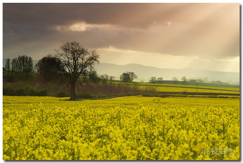 trees sun field yellow clouds canon ray 7d nd vista burst filters rapeseed 24105 stawell