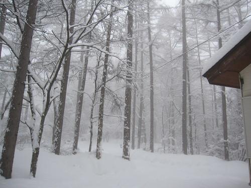 雪が風で舞って… by Poran111