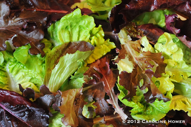 Fresh lettuces from the garden