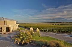 También Neuquén tiene su ruta del vino