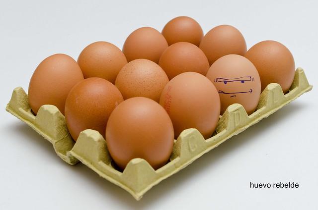 207/366: huevo rebelde