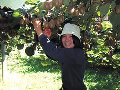 Fruits-picking